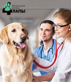 Квалифицированная ветеринарная помощь Вашему питомцу! Клиника