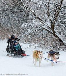 Катание на собачьей упряжке, невероятно милые фотосессии и прогулки с Самоедами и Хаски, аренда уютного гриль-домика для отдыха со скидкой 50% на природе от