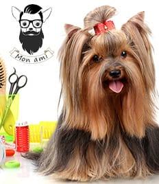 Широкий спектр услуг по уходу за Вашими питомцами! Скидка 15% от салона красоты для животных «Mon ami» на все услуги!