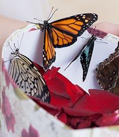 Фейерверк эмоций, романтика и красота! Экзотические бабочки со скидкой до 50%!
