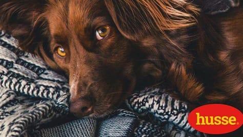 Скидка 30% на корм для кошек и собак от магазина «Husse».