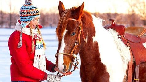 Сказочные зимние прогулки на природе от конного клуба «ПРЕСТИЖ» со скидкой до 57%!