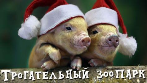 Новогодний подарок для детей и их родителей! Скидку 50% на входной билет в «Трогательный Зоопарк»