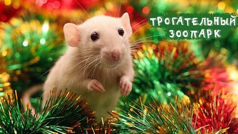 Новогодний подарок для детей и их родителей! Скидку 50% на входной билет в «Трогательный Зоопарк».